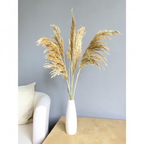 Pampas Grass, 6 Stk., 70cm, beige