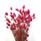 Phalaris, ca. 150g, rosa gefärbt